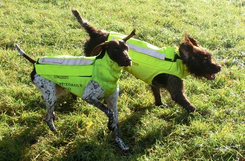 2 Hunde in Bewegung mit Weste